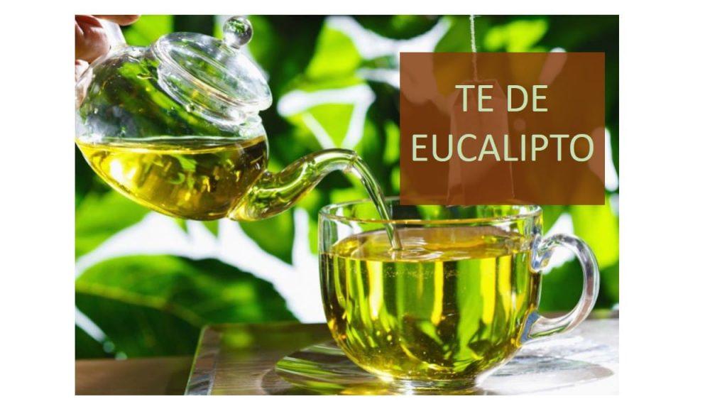 infusion de eucalipto para la tos