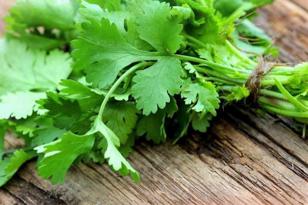 infusion de cilantro para bajar la regla