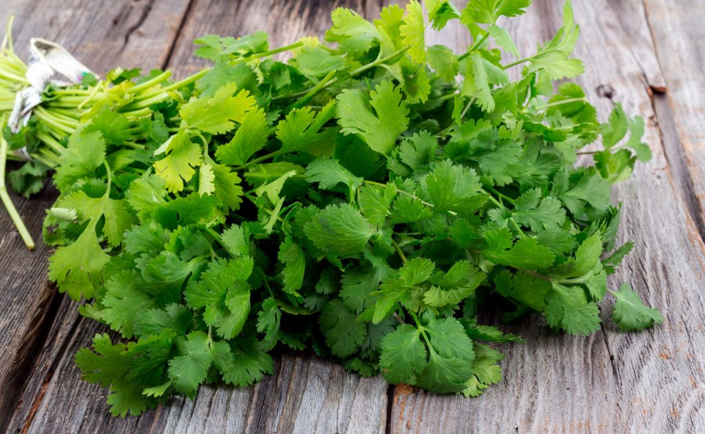 infusion de cilantro para adelgazar