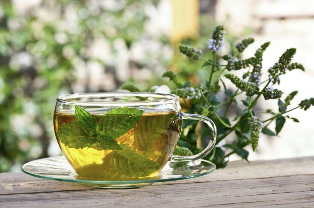 infusion de cilantro fresco