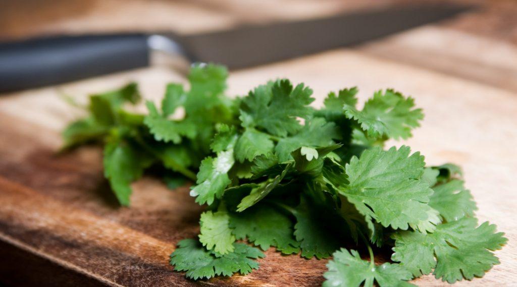infusion de cilantro y jengibre
