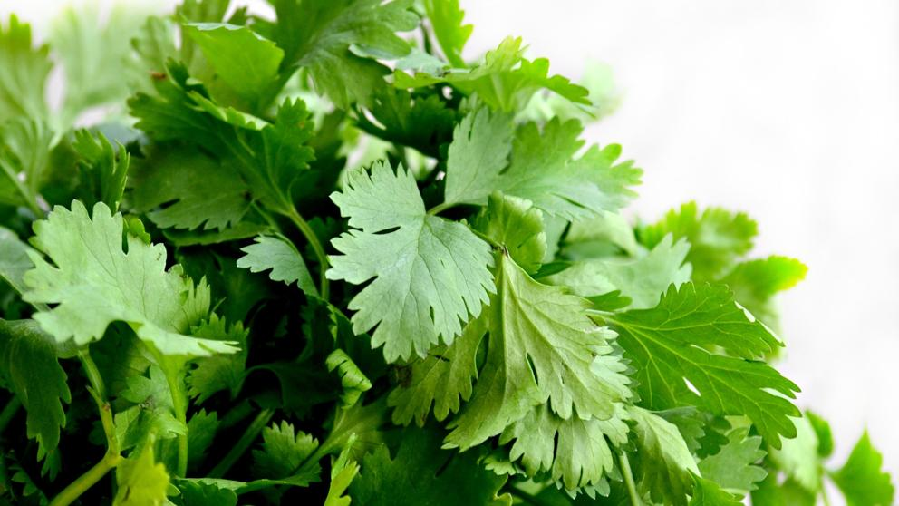 infusion de cilantro beneficios
