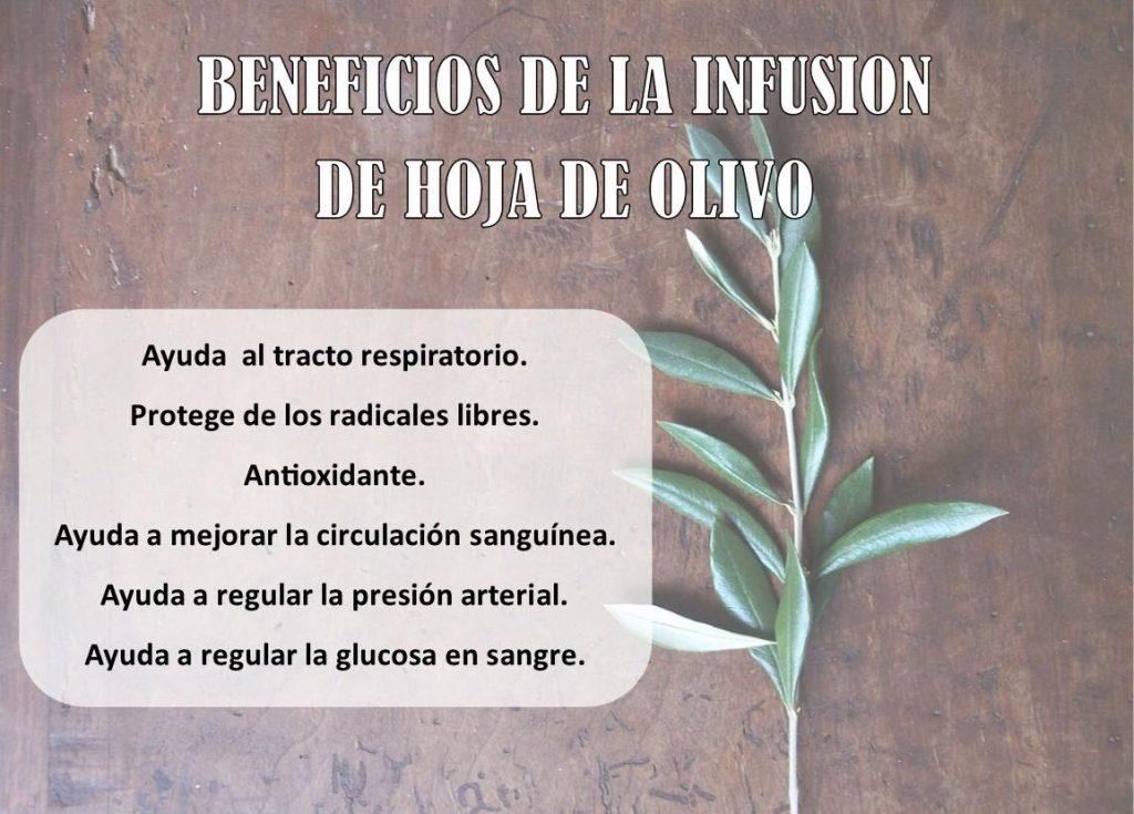 infusion de hojas de olivo para bajar la tension