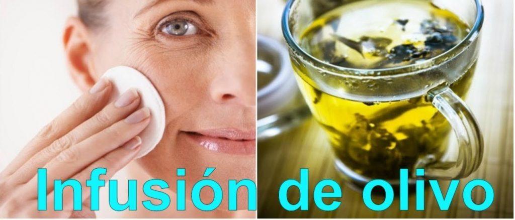 infusion de hojas de olivo propiedades